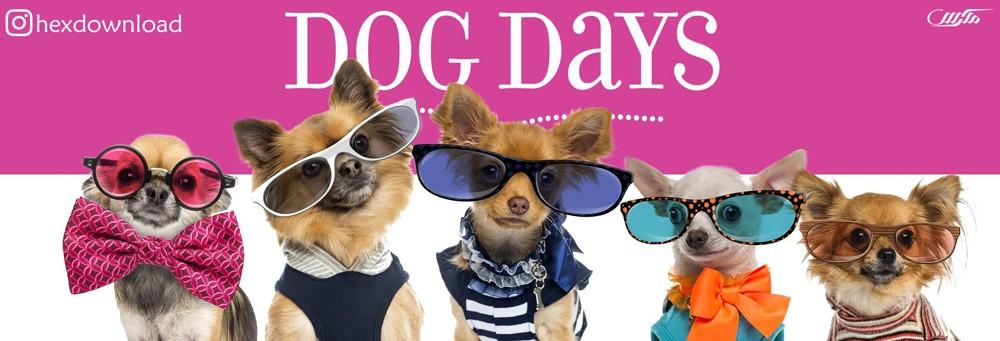 دانلود فیلم Dog Days 2018