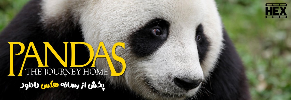 دانلود مستند پانداها سفر به خانه 2014